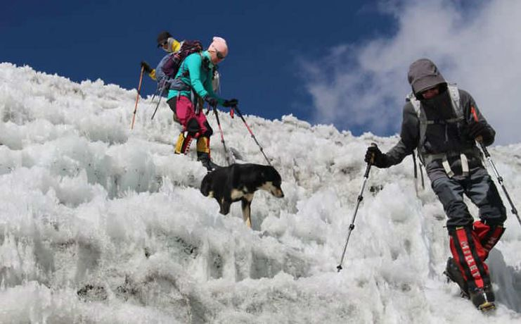 Meet Mera, the first dog to trek 23,000 ft in the Himalayas!