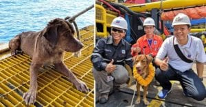 Stranded dog discovered paddling 130 miles from shore rescued by oil rig workers