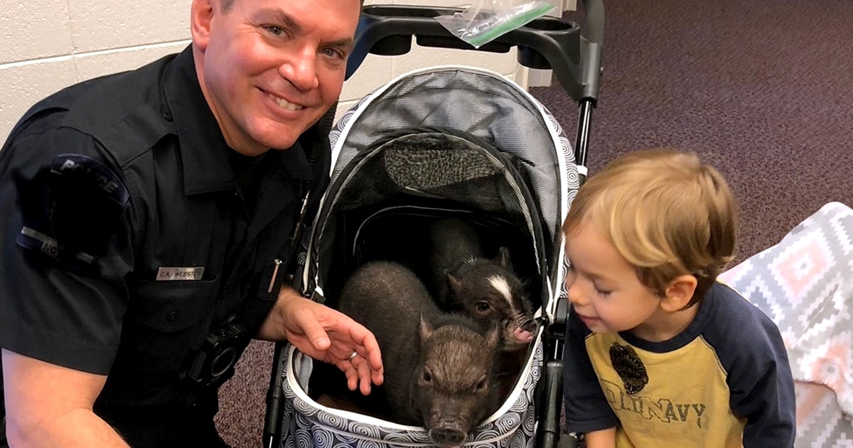 Sgt. Snuggles - Police Officer's Pigs Bring Cheer to N.C. Children Who Have Lost a Sibling