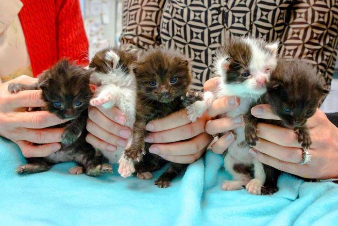 Five cute little kitten stowaways found after long journey in steel column
