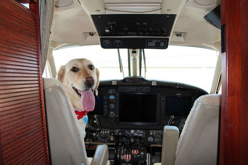 Puppy Pilot' who's flown thousands of miles helps boutique airline
