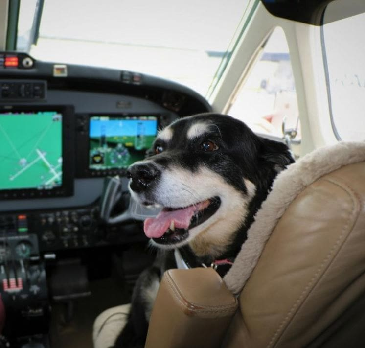 Captain Callie is ready for take off...just kidding! Your pups are more than welcome on our flights though!