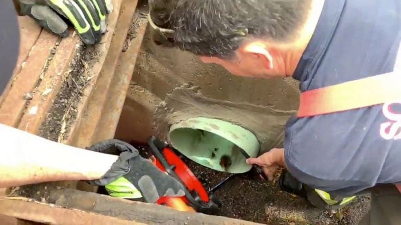 © South Metro Fire Rescue Firefighters used duck calls on YouTube to lure out ducklings from a storm drain pipe.
