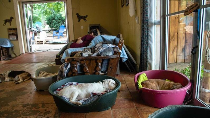 Dogs snoozing at Old Friends Senior Dog Sanctuary in Tennessee.