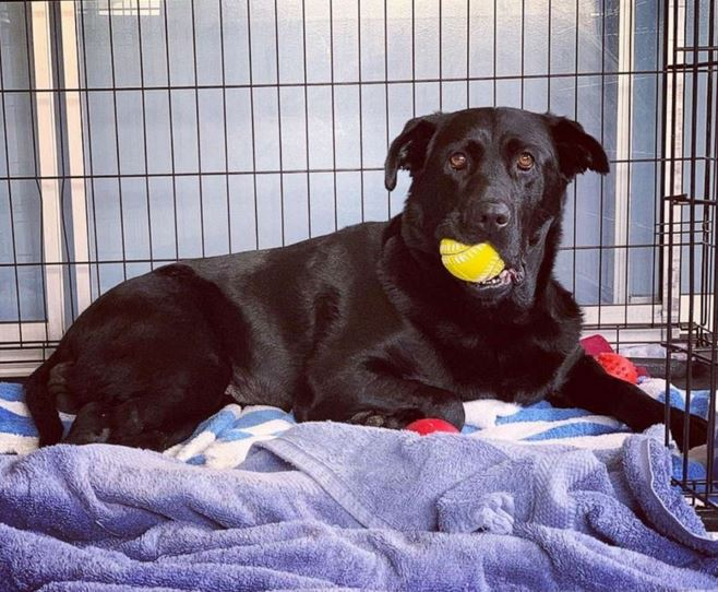 Despite obstacles, Maggie is a lovable dog who likes going on walks and playing with her yellow ball.