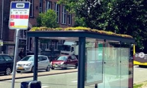 Holland has covered hundreds of bus stops with plants to welcome honey bees and promote clean air