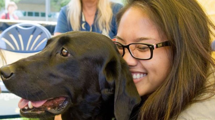 Therapy dogs are used in more than 1,000 universities and colleges in the US