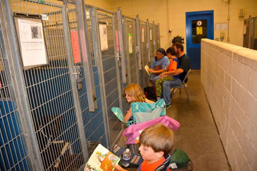 People Are Skipping 4th Of July Fireworks To Comfort Scared Shelter Dogs