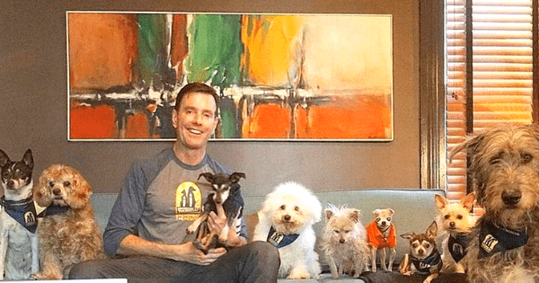 Man visits shelters to ask for dogs no one wants, then adopts 10 senior dogs that couldn't find a home