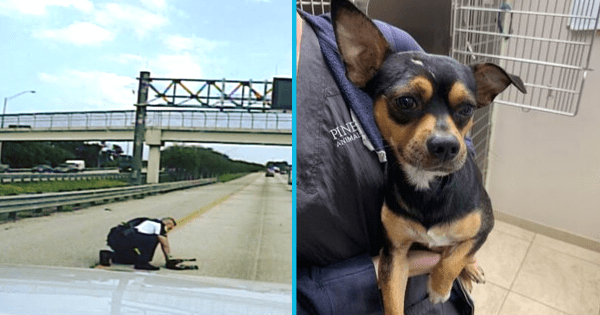 "Police officer stops traffic on busy highway to rescue dog hit by a car – ""he's definitely one lucky dog"""