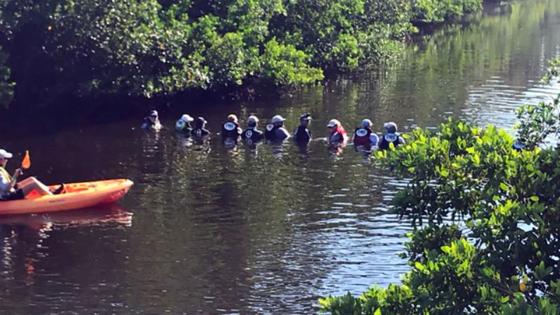 Dolphins trapped in Florida canal were returned to safety thanks to the teamwork of human chain.