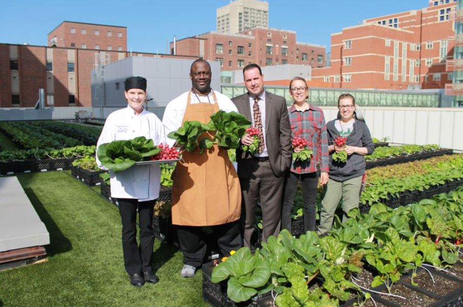 Hospital in Boston has a rooftop farm that produces over 5k pounds of fresh food for its patients.
