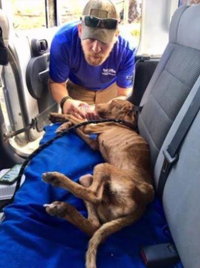 Bahamas dog miraculously survives weeks stuck under rubble following Hurricane Dorian. Credit: Big Dog Ranch Rescue