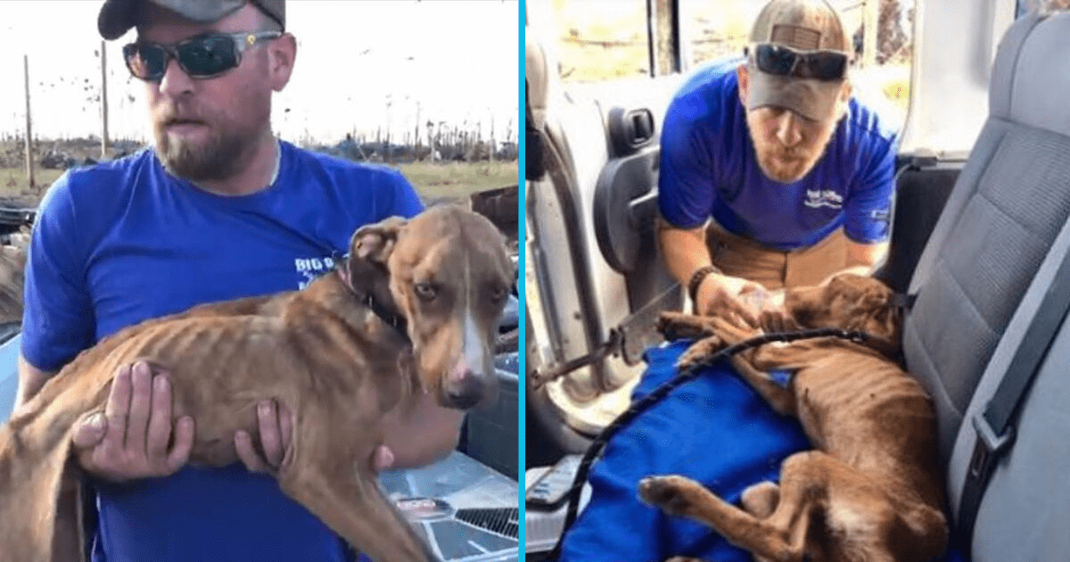 Bahamas dog miraculously survives weeks stuck under rubble following Hurricane Dorian. Credit: Big Dog Ranch Rescue