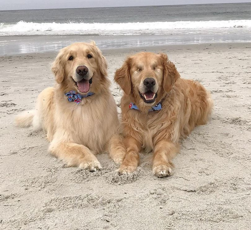 Blind Golden Retriever gets his freedom back thanks to his very own guide dog & best friend that leads the way.