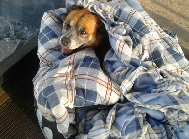 Bus terminal in Brazil provides warms beds, food and water for homeless dogs trying to escape the cold.