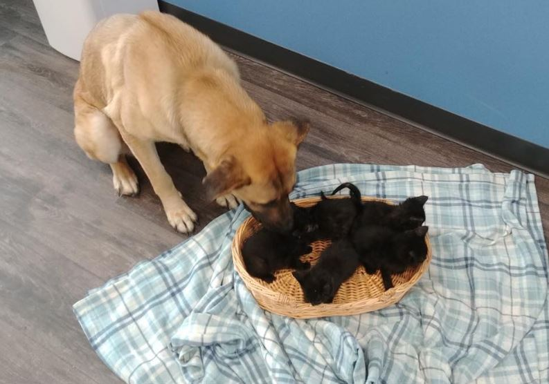 Stray dog found on roadside protecting 5 kittens from the cold and all 6 get hundreds of adoption offers.