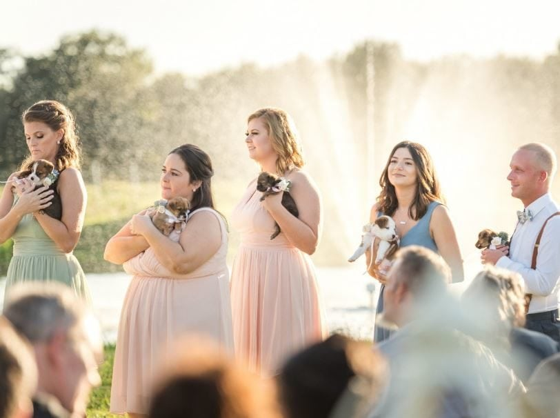 Bridal party carries rescue puppies down the aisle instead of bouquets to try and get them adopted.